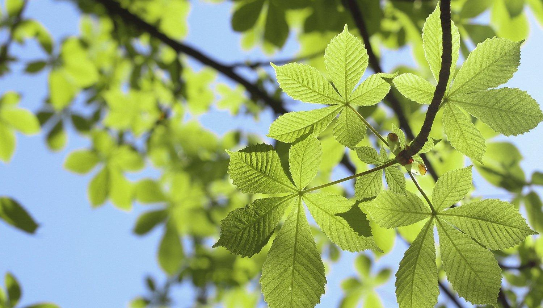 green-initiatives-slider